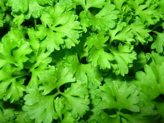 parsley-tea-for-colon-cleanse