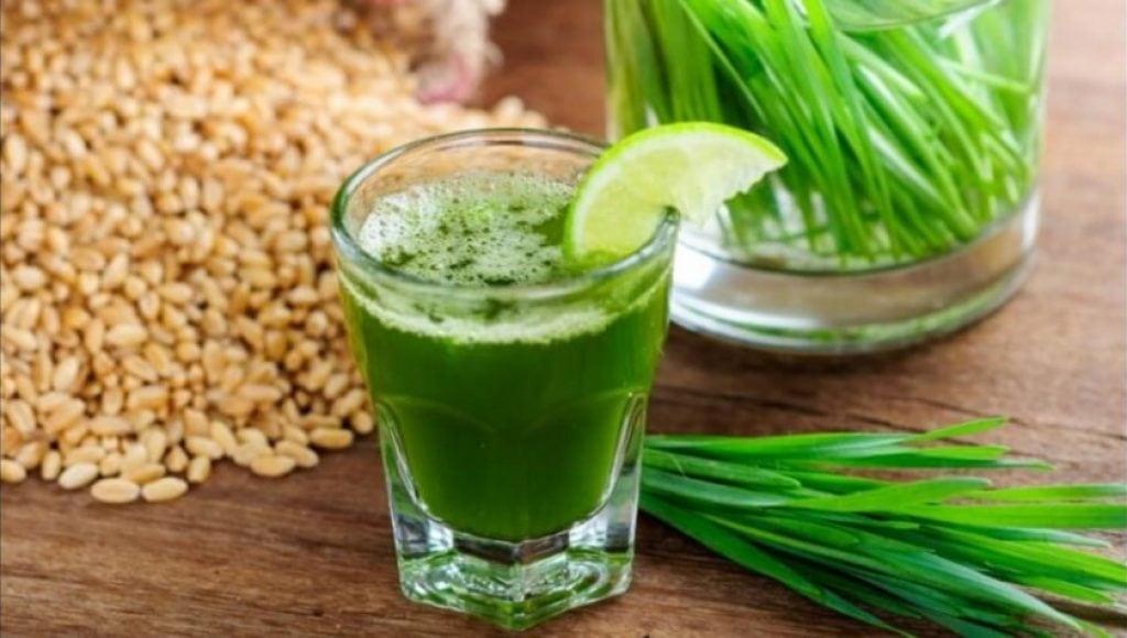 wheatgrass-juice-recipe