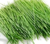 best-wheatgrass-juicers