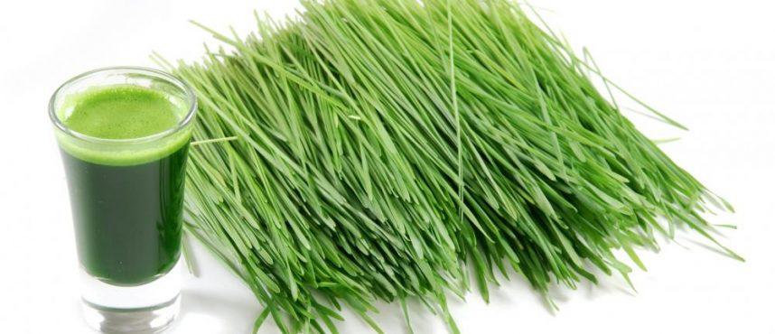 best-wheatgrass-juicers